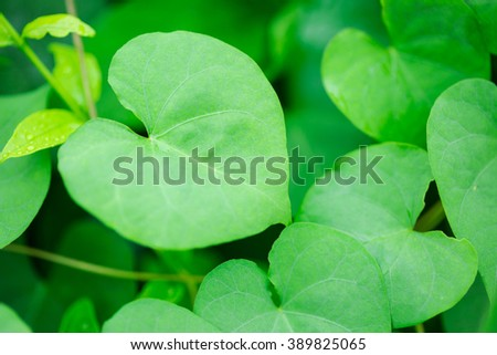 Green heart shape leaf - stock photo