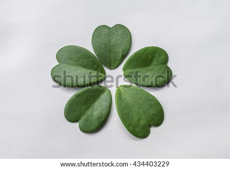 green heart shaped leaves in  spring summer season  on white background, green tree  - stock photo