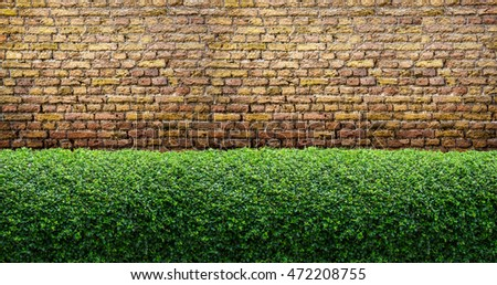Green hedge leaves fence onbrick wall background