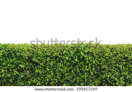 green hedges or green fence isolated - stock photo