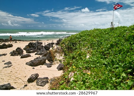 Green herbs and rocks cover this tropical beach in the northeast of Brazil
