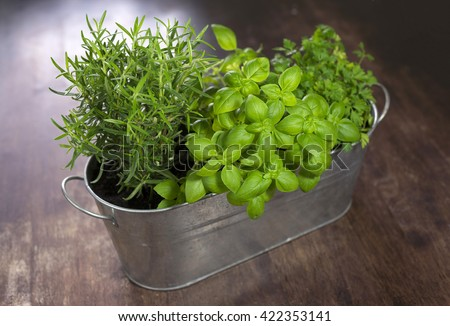 Green herbs in a pot home - stock photo