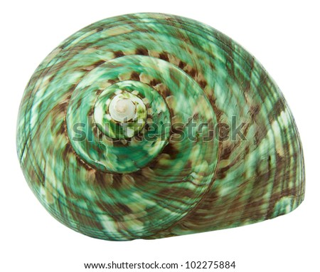 Green Hermit Crab sea shell isolated on white