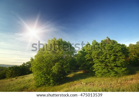 Green hill and trees, springtime. Nature composition