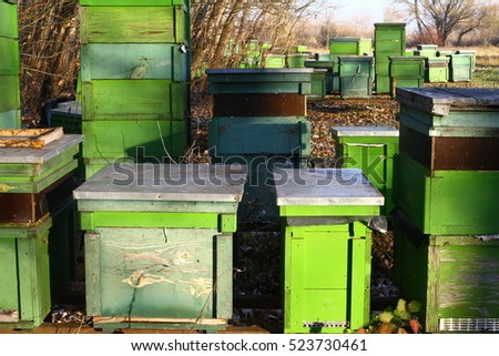 Green hive box in forest