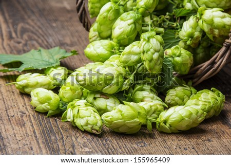 green hop cones on a wooden table - stock photo