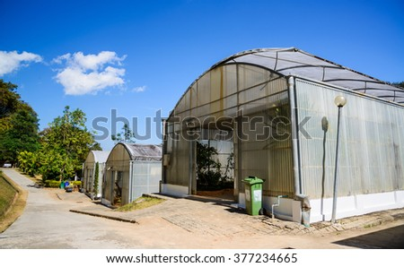 Green house , young plants growing in a very large plant nursery house in farm.