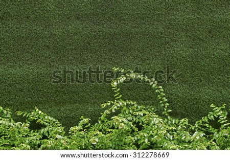 green ivy bush against wall of green grass - stock photo