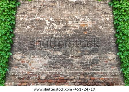 Green ivy creeper on brick wall - stock photo