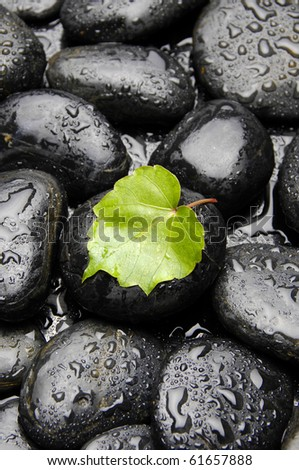 Green ivy leaf in water drops on wet pebble