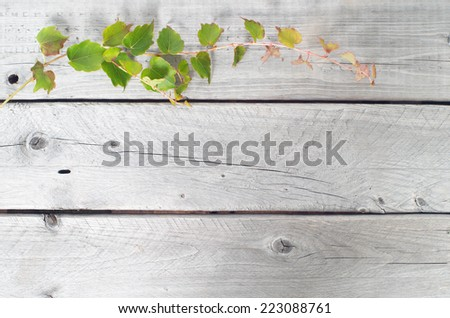 Green ivy vine against wooden texture background  - stock photo