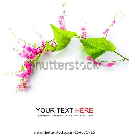 Green ivy with pink blossoms on white background - stock photo