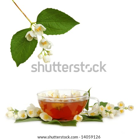 Green jasmine tea with fresh jasmine flowers. - stock photo