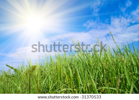 Green, juicy grass and sun on dark blue sky - stock photo