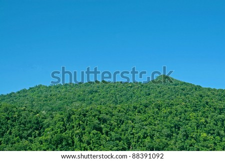 green jungle canopy against blue sky