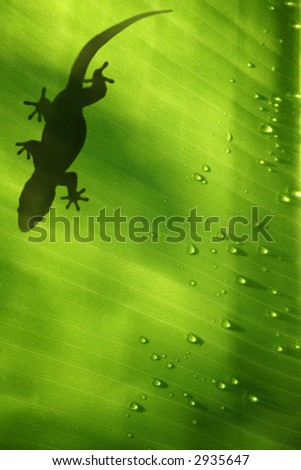 Green jungle leaf with gecko on top - stock photo