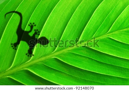 green jungle leaf with gecko shadow showing rainforest or nature concept - stock photo