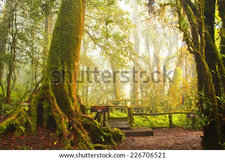 Green jungle,tree rain forest of ang ka trail in doi inthanon national park, Thailand - stock photo