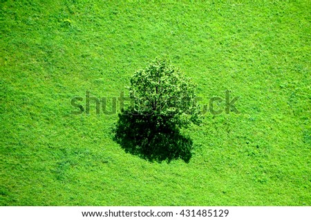 Green landscape, oak tree. - stock photo