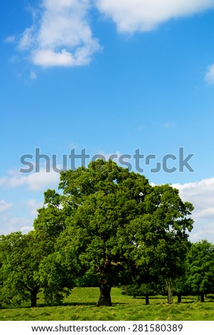 Green Landscape with Blue Sky in the Park . England, Uk - stock photo
