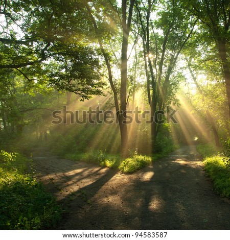 Green landscape with sun rays shining through branches of trees, forest landscape - stock photo
