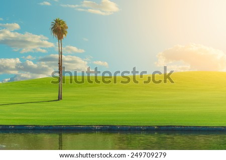 Green landscape with tropical tree during warm bright clear sky day, vibrant colors - stock photo
