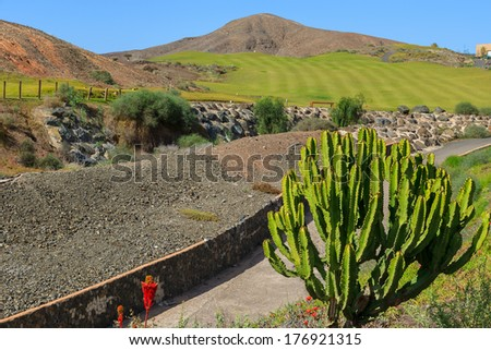Green large cactus plant and mountains view in countryside landscape of Las Playitas town, Fuerteventura, Canary Islands, Spain  - stock photo