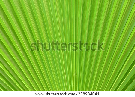 Green large palm leaf close-up - stock photo