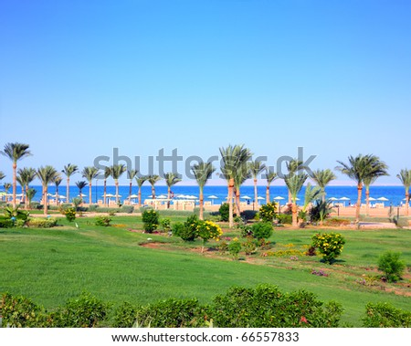 green lawn and palm trees on tropical beach in Egypt