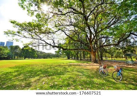 Green Lawn and Tree in Park - stock photo