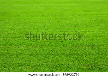 green lawn, background - stock photo
