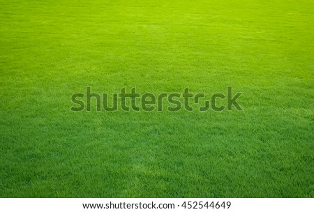 green lawn,backyard for background - stock photo