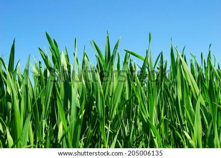 green lawn i - stock photo