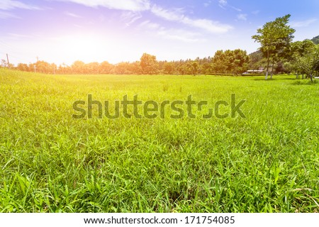 Green lawn in sunset - stock photo