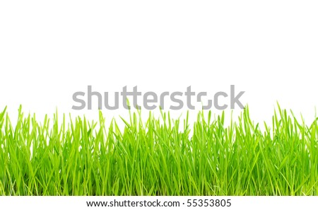 Green lawn isolated on white background