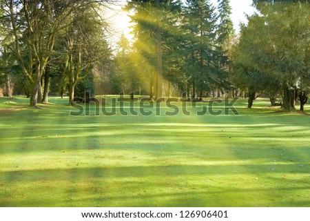Green lawn with trees in park with sunny light - stock photo