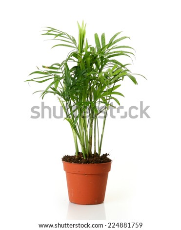 green leaf - stock photo