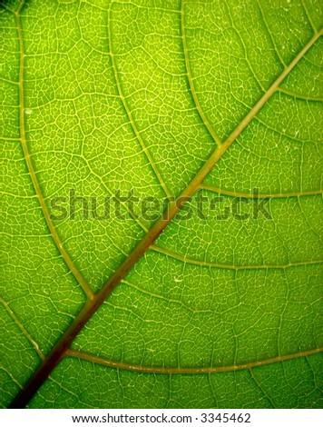 green_leaf_5 - stock photo