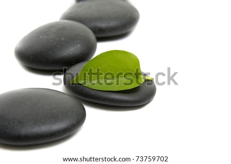 Green leaf and black stones