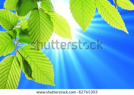 green leaf and blue sky with sun in summer - stock photo