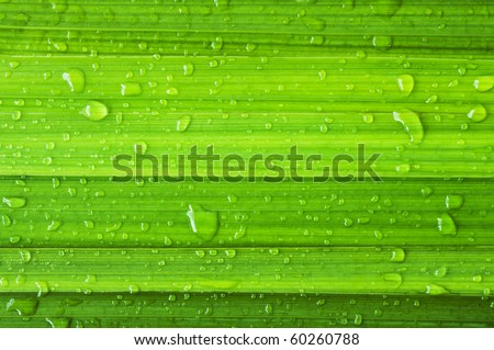 green leaf and dew - stock photo