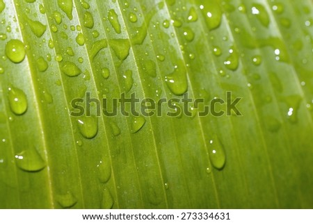 green leaf and  raindrops - stock photo