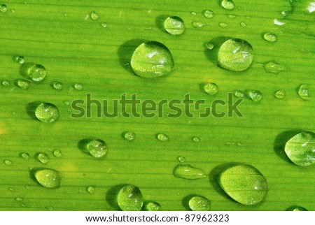 green leaf and raindrops. - stock photo