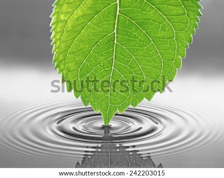 Green leaf and water - stock photo