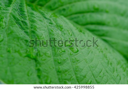 Green leaf and water drop close up with selective focus - stock photo