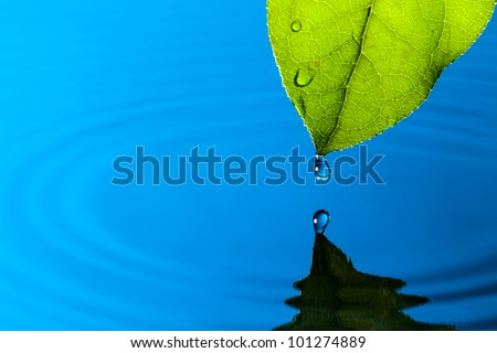 Green Leaf and Water Drop with Reflection - stock photo