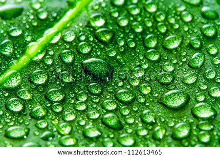 Green leaf and water drops as background - stock photo