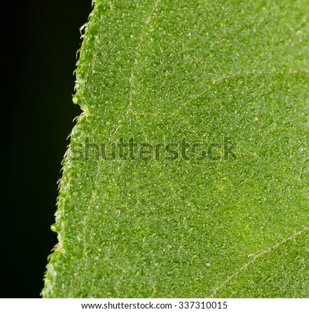 green leaf as a background. close - stock photo