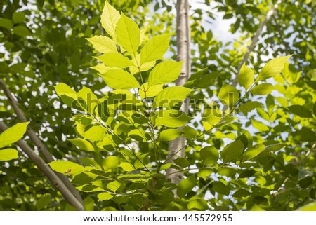 Green leaf as sunlight background
