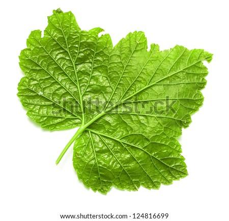 green leaf background - stock photo